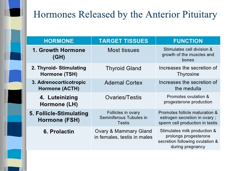 does acth stimulates the adrenal cortex to release corticosteroid hormones