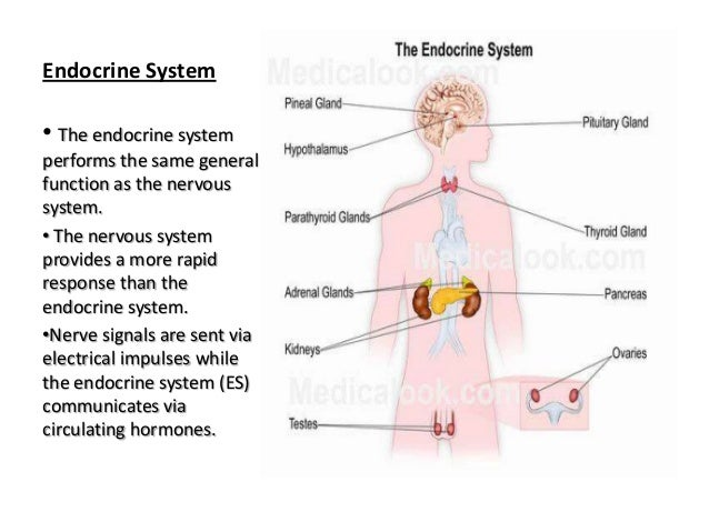 Endocrine system notes Homework Writing Service rvhomeworkfcui.infra ...