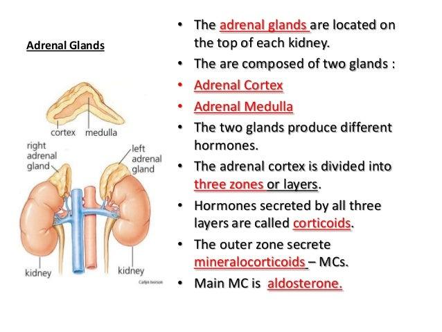 Anatomy endocrine system