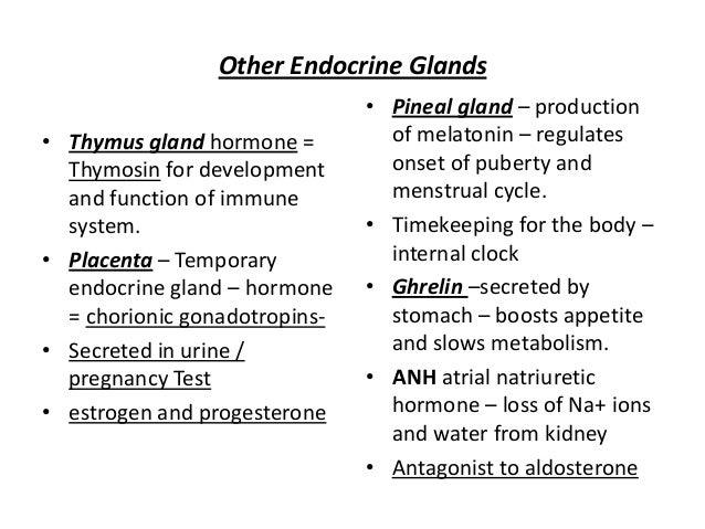 Endocrine gland