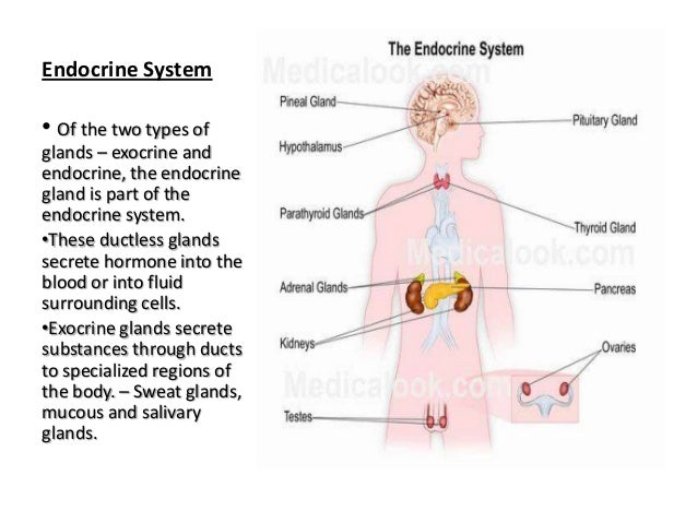 Exocrine System Diagram For School - Block And Schematic Diagrams •