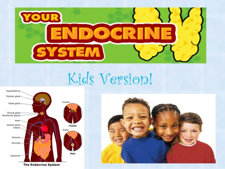 The endocrine system kids version
