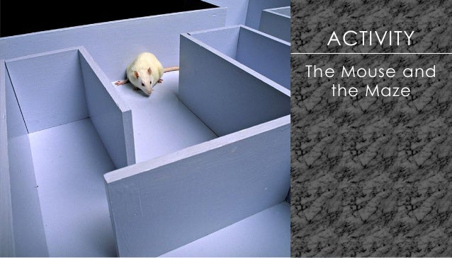 ACTIVITY The Mouse and the Maze