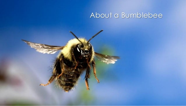 About a Bumblebee