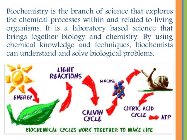 Biochemistry is the branch of science that explores the chemical processes within and related to living organisms. It is a...