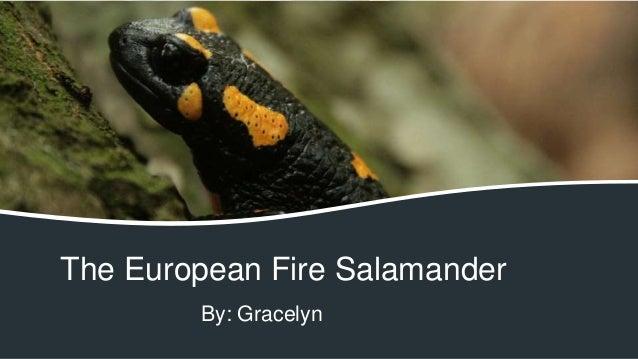 The European Fire Salamander By: Gracelyn