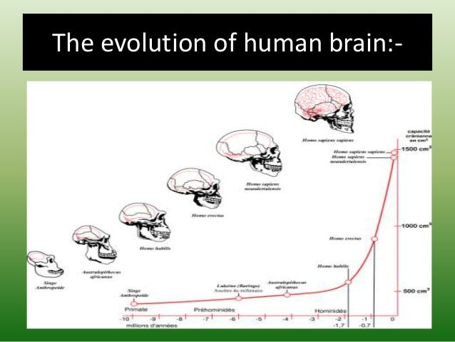 The evolution of human brain:-