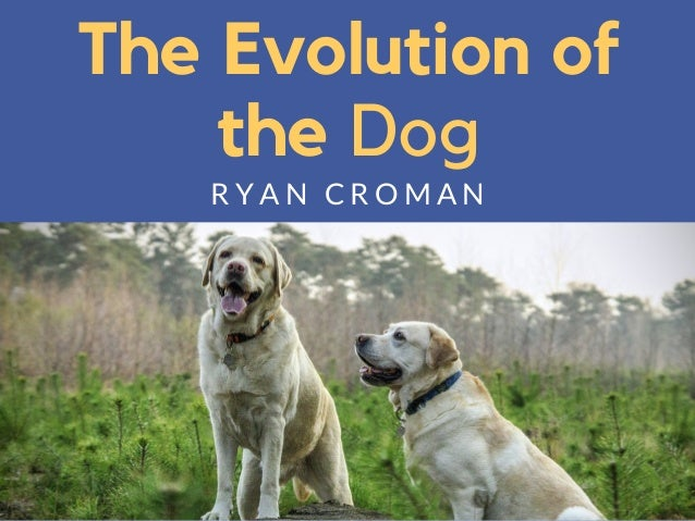 The Evolution of the Dog R Y A N C R O M A N