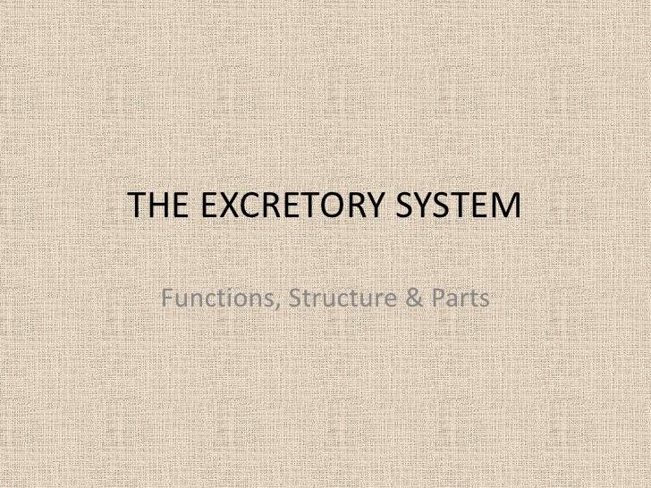 THE EXCRETORY SYSTEM Functions, Structure & Parts