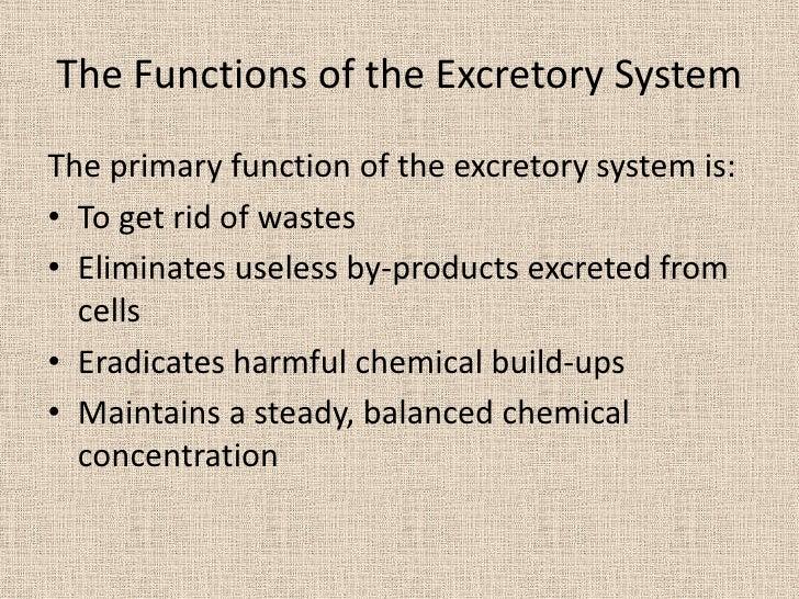 the excretory system, Cephalic Vein