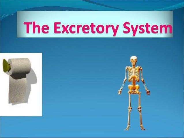 Unit 3(D): The excretory system.