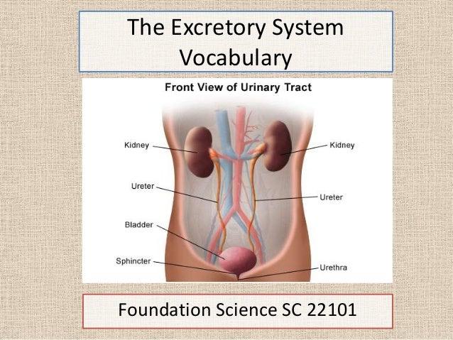 The Excretory SystemVocabularyFoundation Science SC 22101