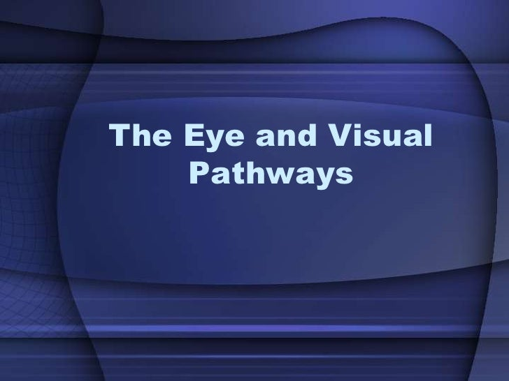 The Eye and Visual    Pathways