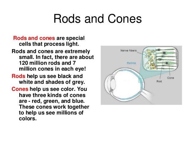 Contoh Grafik Garis Dan Penjelasannya