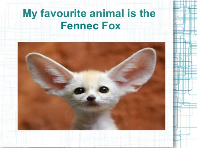 My favourite animal is the Fennec Fox