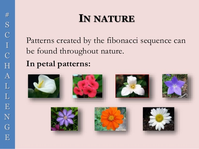 # S C I C H A L L E N G E IN NATURE Patterns created by the fibonacci sequence can be found throughout nature. In petal pa...