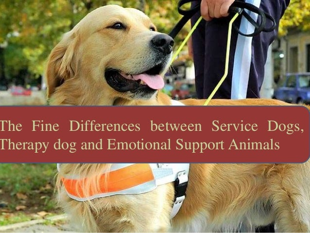 The Fine Differences between Service Dogs, Therapy dog and Emotional Support Animals
