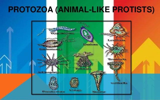 Eukaryotic Make Their Own Food