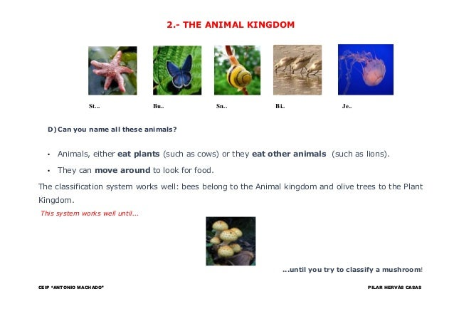 5 kingdoms of life essay Essays related to kingdom protista 1  with the invention of the microscope and further studies of life, three more kingdoms have been recognized, fungi, protista .