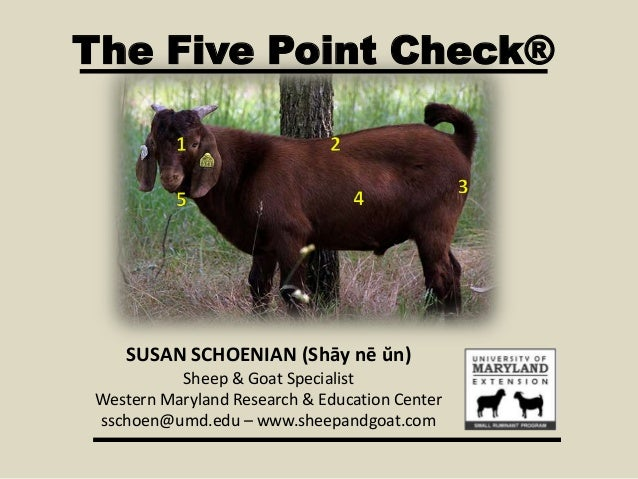 The Five Point Check® SUSAN SCHOENIAN (Shāy nē ŭn) Sheep & Goat Specialist Western Maryland Research & Education Center ss...