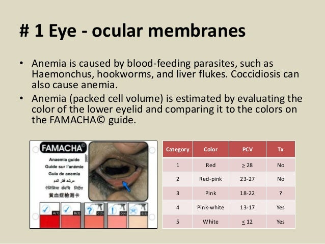 # 1 Eye - ocular membranes • Anemia is caused by blood-feeding parasites, such as Haemonchus, hookworms, and liver flukes....