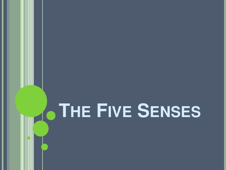 The Five Senses <br />