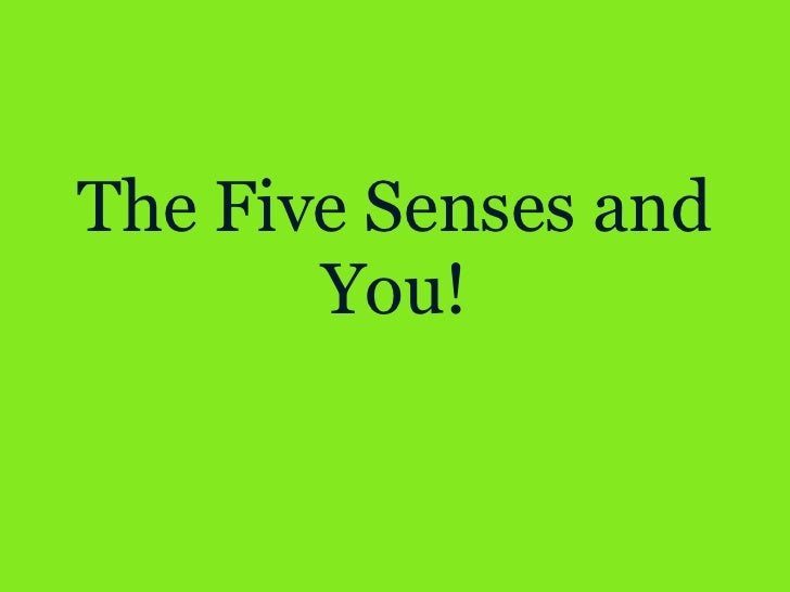 The Five Senses and You!