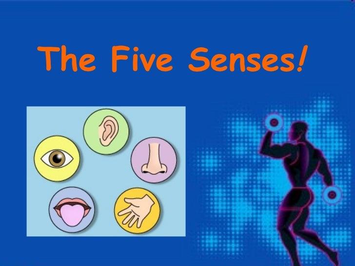 The Five Senses!