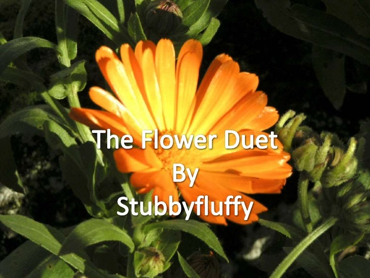 The Flower Duet<br />By<br />Stubbyfluffy<br />