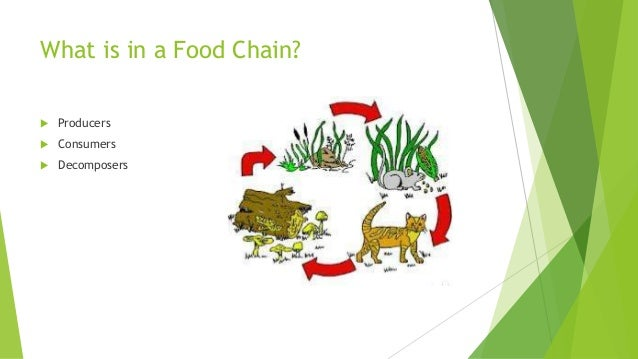 unbalance of food chain There is a balance maintained in the environment because of this food chain this balance the importance of maintaining the ecological balance and conservation.