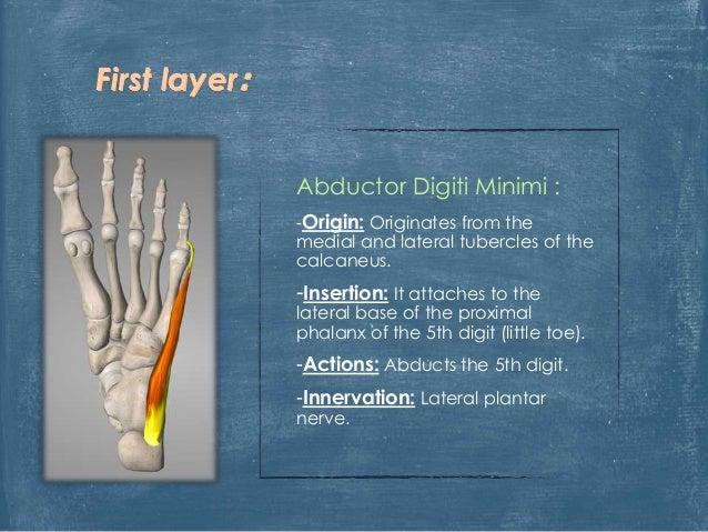 https://image.slidesharecdn.com/thefoot-150902114427-lva1-app6892/95/anatomy-of-the-foot-5-638.jpg?cb=1441194555