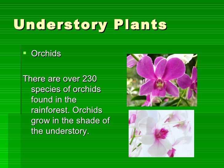 amazon rainforest plants and names. 16 understory plants amazon rainforest and names