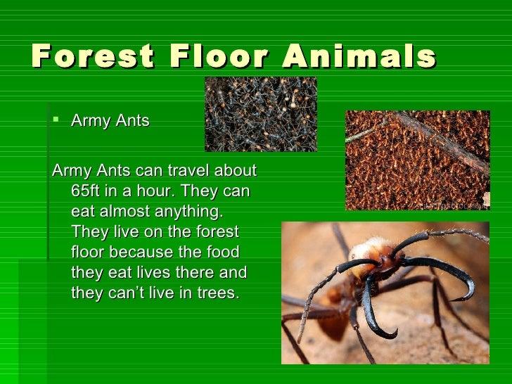 Forest Floor Animals ...