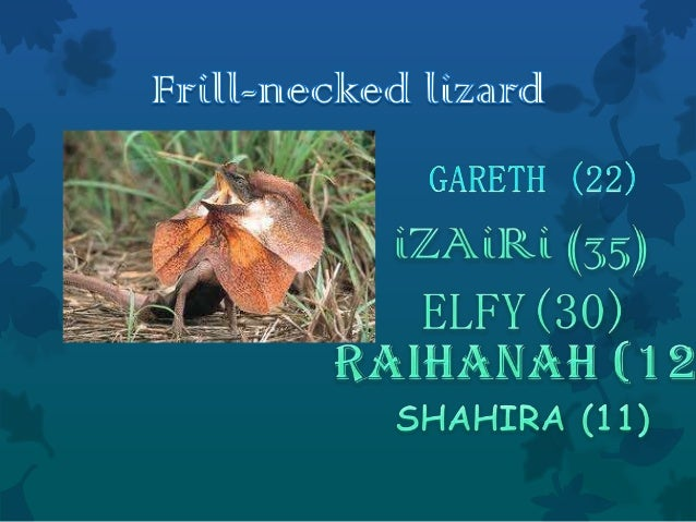 Introduction WHAT is a Frill-necked lizard ? The frill-necked lizard also known as the frilled lizard or frilled dragon, ...