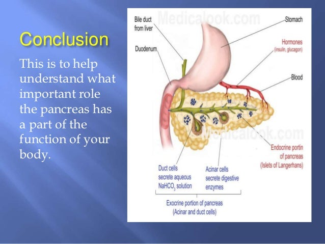 the function of the pancreas, Human body