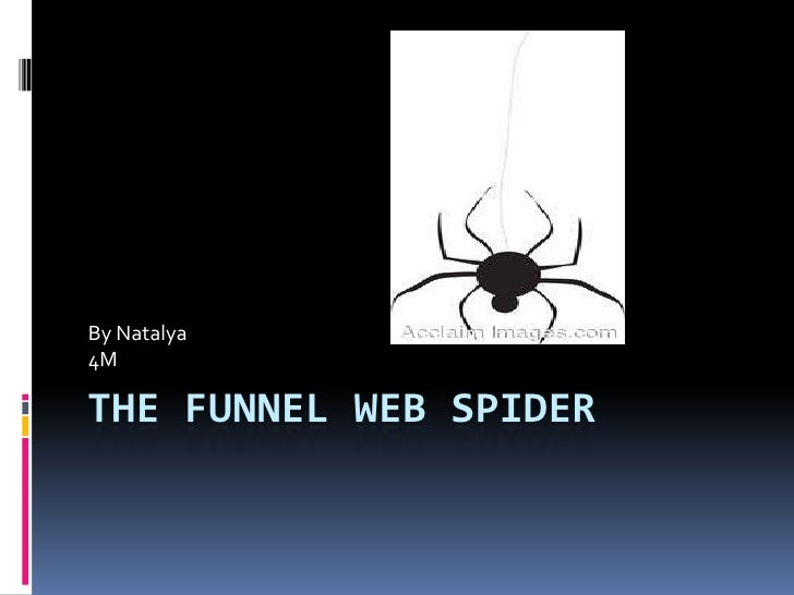 The Funnel Web Spider<br />By Natalya <br />4M<br />