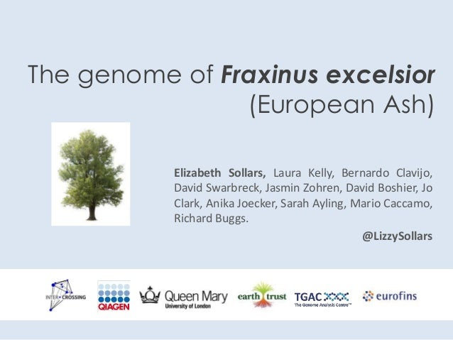 The genome of Fraxinus excelsior (European Ash) Elizabeth Sollars, Laura Kelly, Bernardo Clavijo, David Swarbreck, Jasmin ...