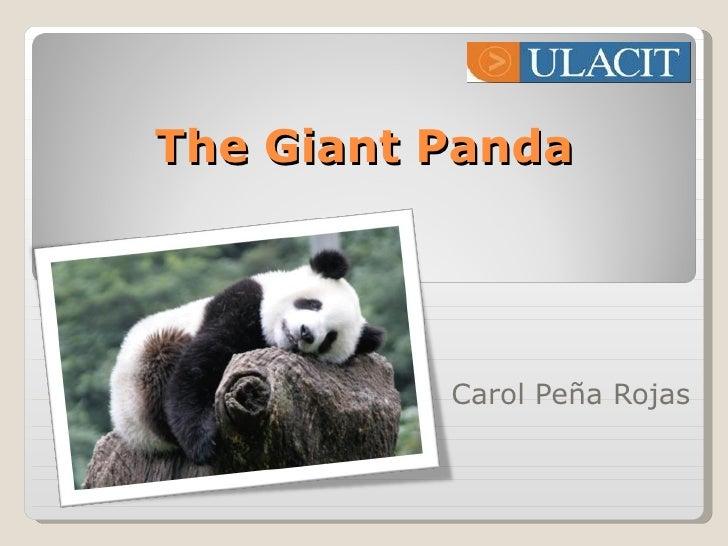 The Giant Panda Carol Peña Rojas