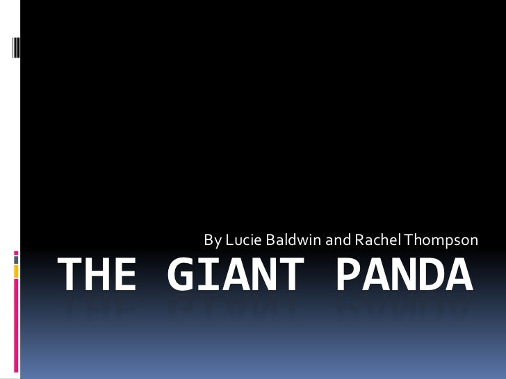 THE GIANT PANDA<br />By Lucie Baldwin and Rachel Thompson<br />