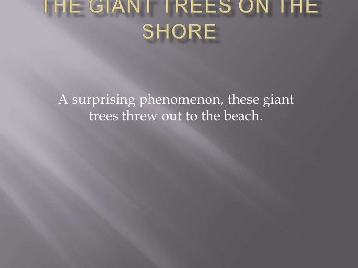The Giant trees on the shore<br />A surprising phenomenon, these giant trees threw out to the beach.<br />
