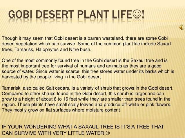 Natural Resources In The Gobi Desert