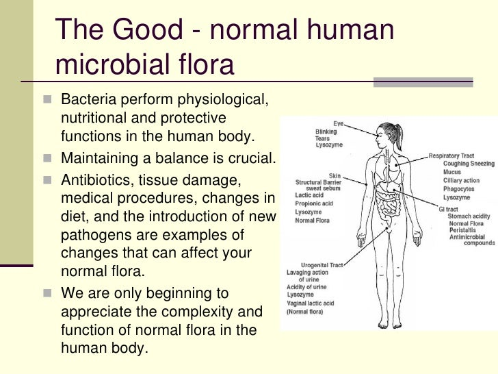 normal body flora Bacteria are predominant normal flora organisms they have an extraordinary ability to attach and colonize epithelial cells, to multiply and establish in human body every human being has specific.