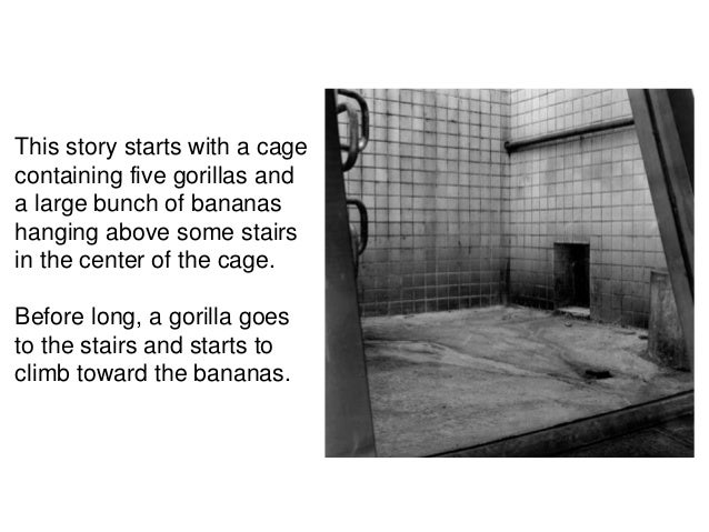 This story starts with a cagecontaining five gorillas anda large bunch of bananashanging above some stairsin the center of...