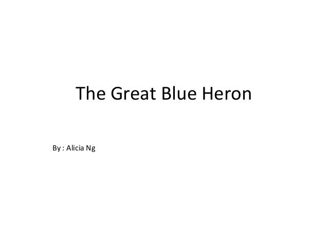 The Great Blue Heron By : Alicia Ng