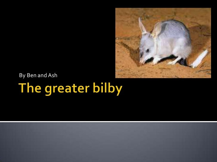 The greater bilby<br />By Ben and Ash<br />