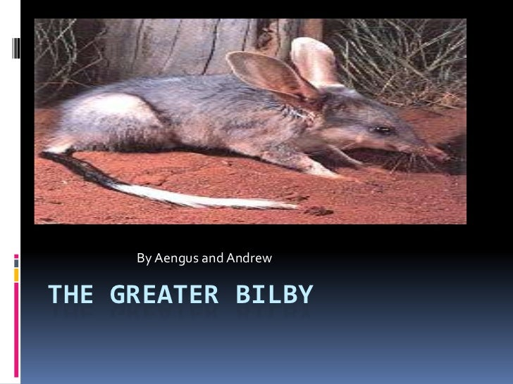 By Aengus and Andrew<br />The Greater Bilby<br />