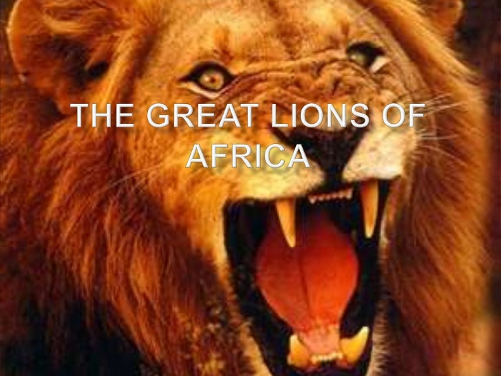    Lions are carnivores and eat meat they go after large    animals such as buffalo, zebra, wildebeests, and    waterbuck...