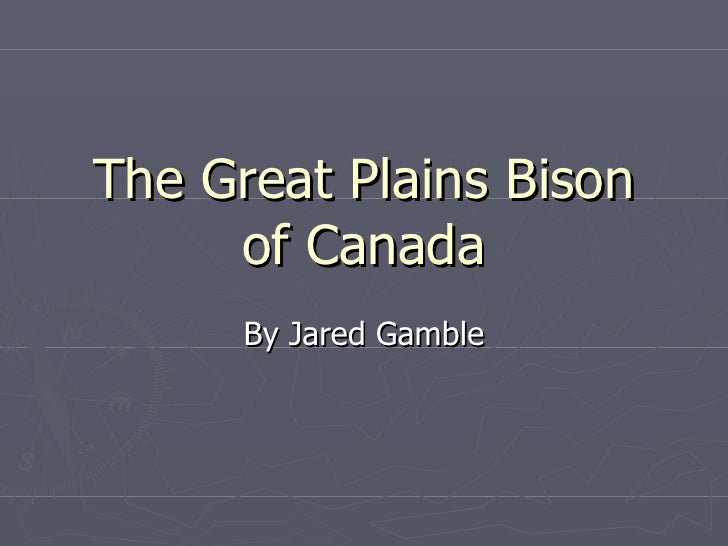 The Great Plains Bison of Canada By Jared Gamble