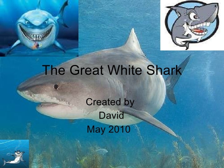 The Great White Shark Created by David May 2010