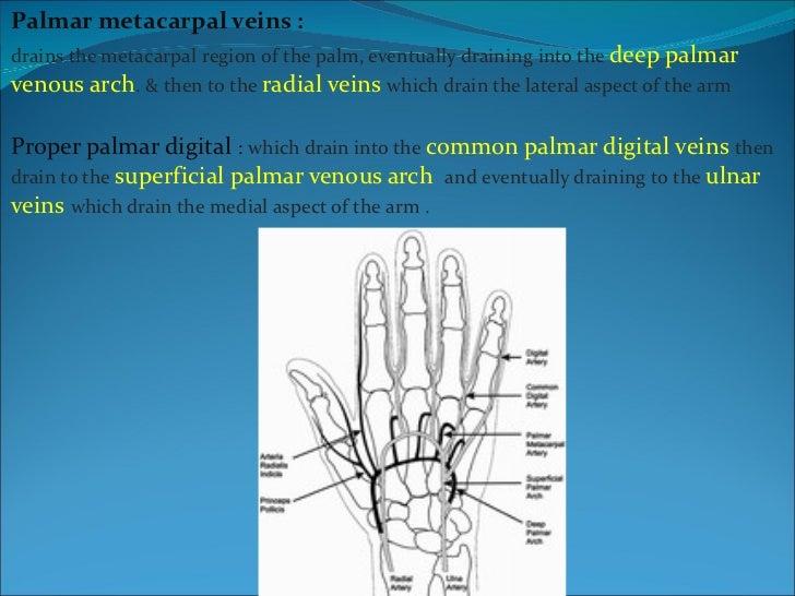 The Hand Anatomy Part 1